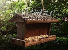 Anti-squirrel bird feeder